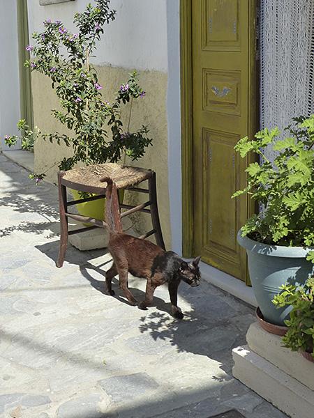 le chat devant la porte verte