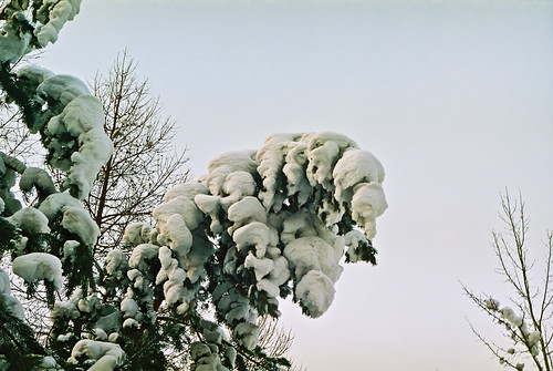 Snow cover | by Valery Chernodedov