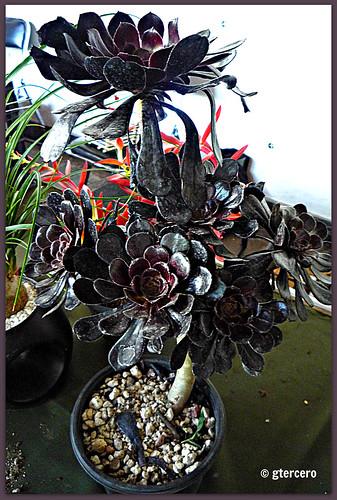 Planta de ornato san angel m xico d f p1090585e for 10 plantas de ornato