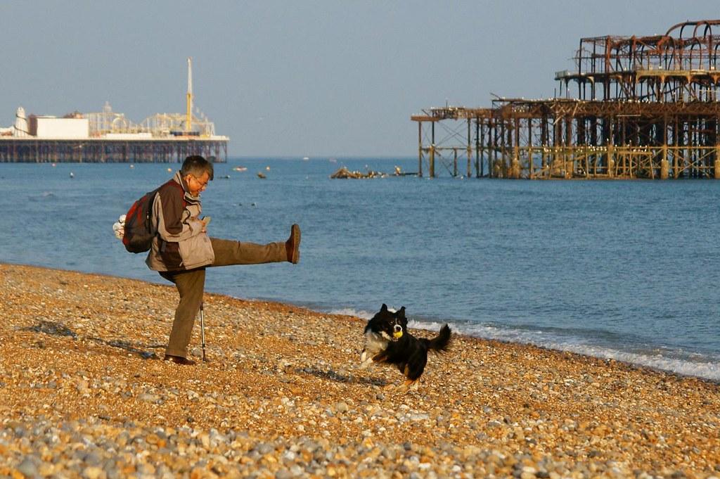 Dog Training Play Pan