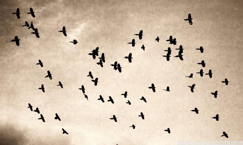 Flock Wallpaper 800x480 Ftunews Flickr