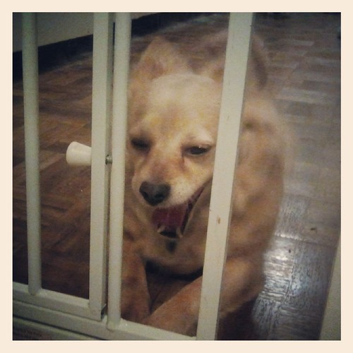 Doggie Jail | by Jodi K.