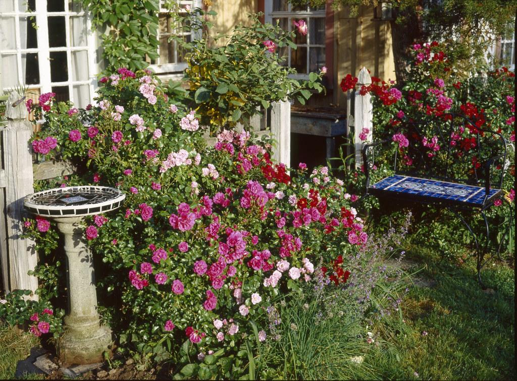 Flower Carpet Roses With Birdbath Blue Bench A Mix Of