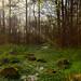 Arboretum wetlands 04-01-2012 258