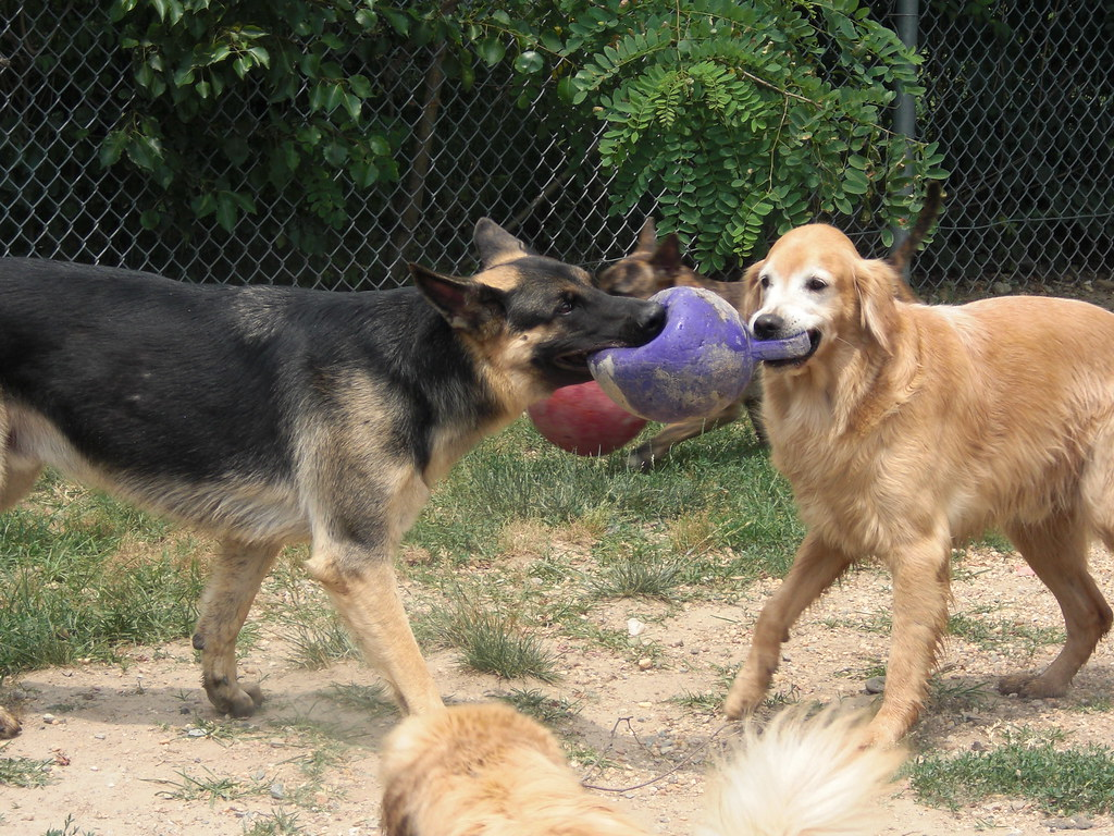 Image Result For Dog Training For