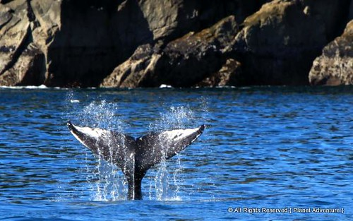 Whale Tail | by { Planet Adventure }