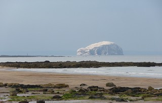 Bass Rock covered with guano | by yellow book