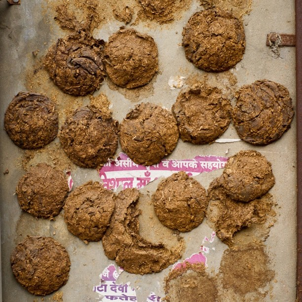 Real Recycling Ox Dung Patties Fuel Solar Bio Alt