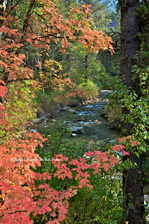 Mountain Maples, Big Elk Creek | by Daryl L. Hunter - Hole Picture Photo Safaris