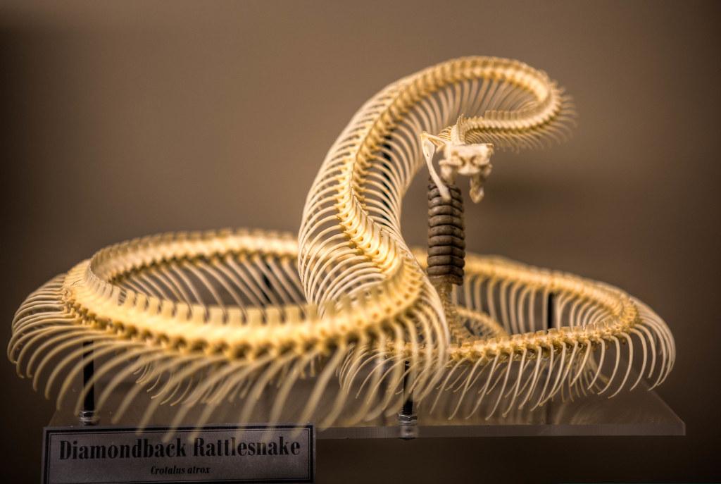 10405-BoneMuseum-20120829-HDR