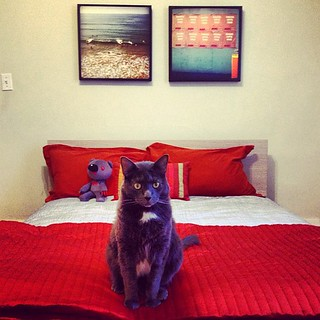 The Swiss Miss arrives in a few hours. Unfortunately, it looks like Biddy has already claimed the guest room. | by heidi.swift