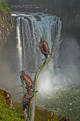 Snoqualmie Falls and Eagles | by littlebiddle