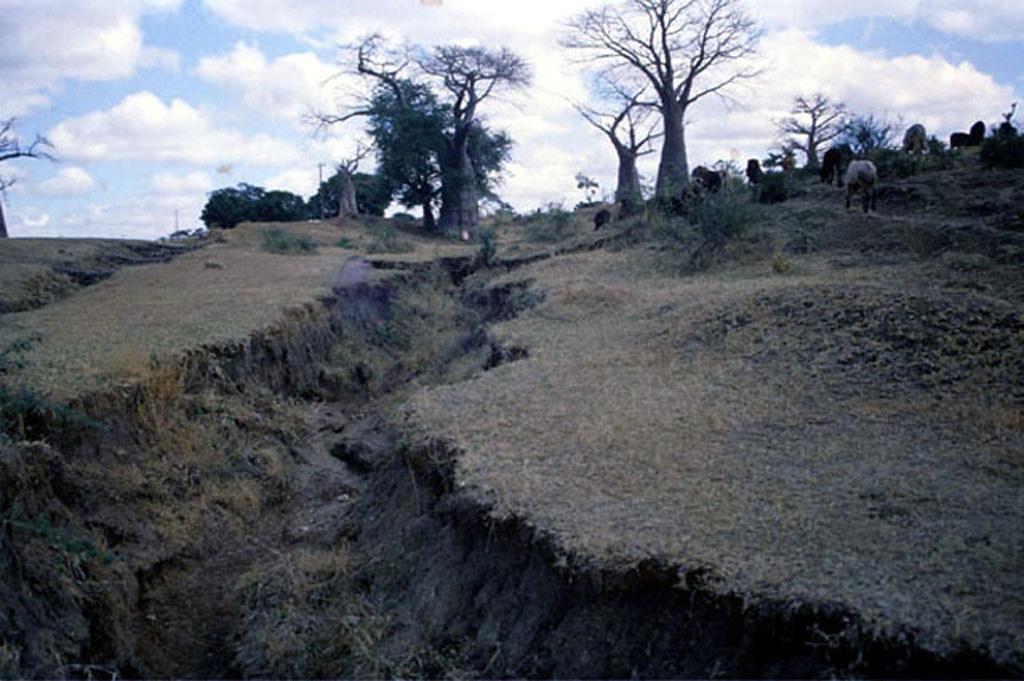 Gulley Erosion