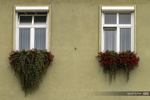 windows_with_beard | by alamond