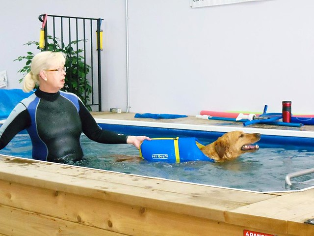 Canine Aquatic Therapy With Endless Pools Flickr Photo