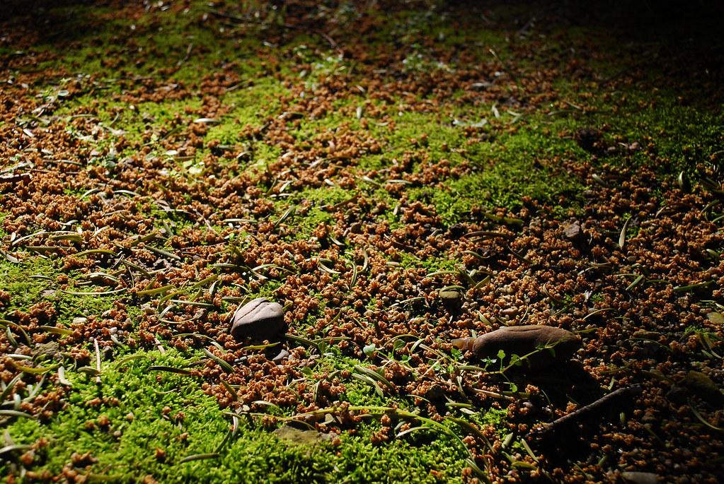 El suelo la piedra y las sombras el suelo del parque for Suelo 3d madrid