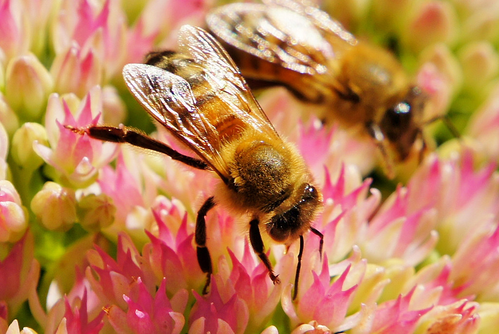 Some Bees On A Flower In The Carl S English Jr Botanical Flickr