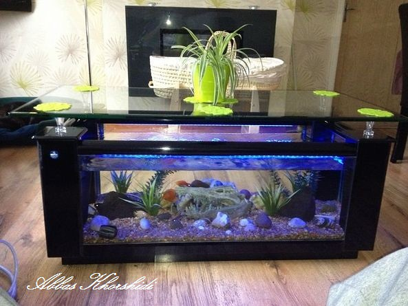 Tropical Fish Tank Gorgous Coffee