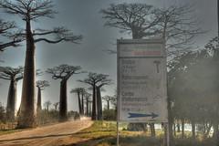 Avenida dos Baobás