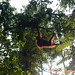 Orangutan World, Tanjung Puting Borneo Adventure-85.jpg