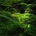 Sunlight on green Fern