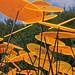 artflowers