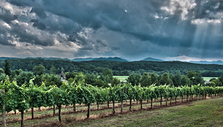 Antler Hill Vineyard | by Alachua Red