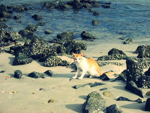 The Cat and the Sea | by luceknight