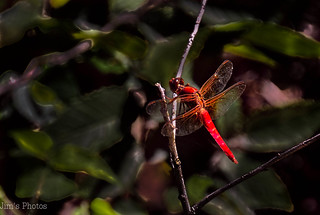 Dragonfly | by Jims_photos