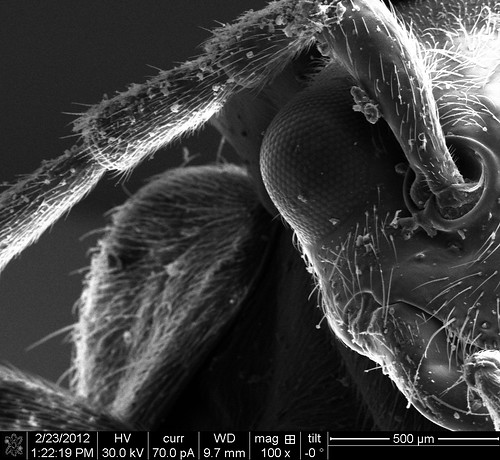 the angry fly | by Thermo Fisher Scientific