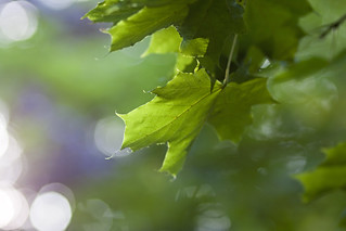 Green bokeh | by horrigans