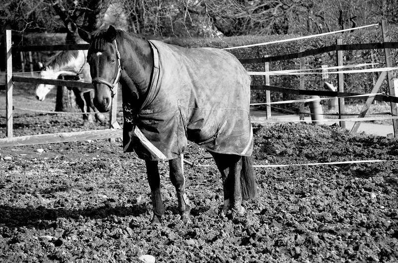 Horse in Feldbrunnen
