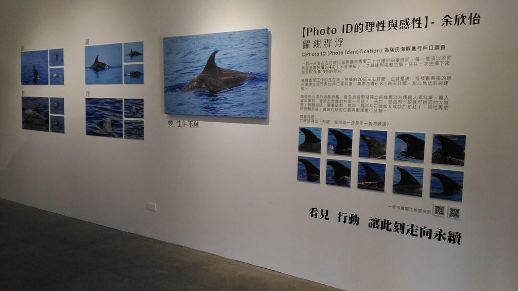 余欣怡作品〈Photo ID的理性與感性〉,說明如何利用海豚背鰭進行個體辨識。攝影:林倩如。