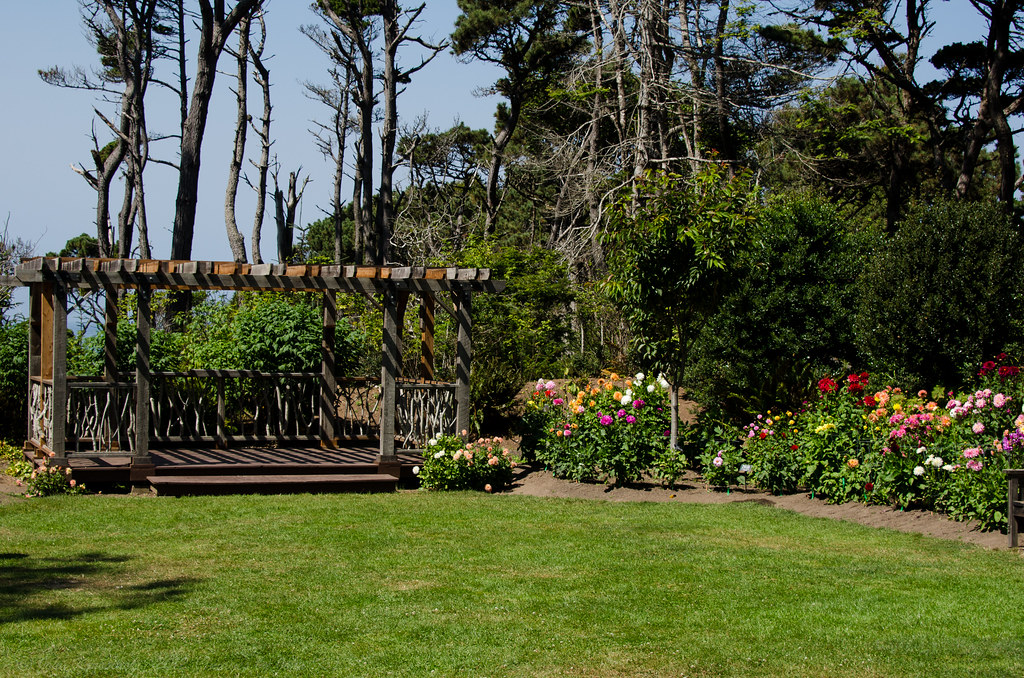 In The Dhalia Garden At The Mendocino Coast Botanical G Flickr