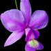 Exhibition of Orchids at the Botanical Garden, Rio de Janeiro.