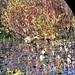 Purple Gallinule- Stony Brook Wildlife Sanctuary, Norfolk MA