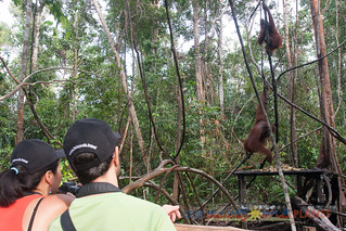 Orangutan World, Tanjung Puting Borneo Adventure-95.jpg | by OURAWESOMEPLANET: PHILS #1 FOOD AND TRAVEL BLOG