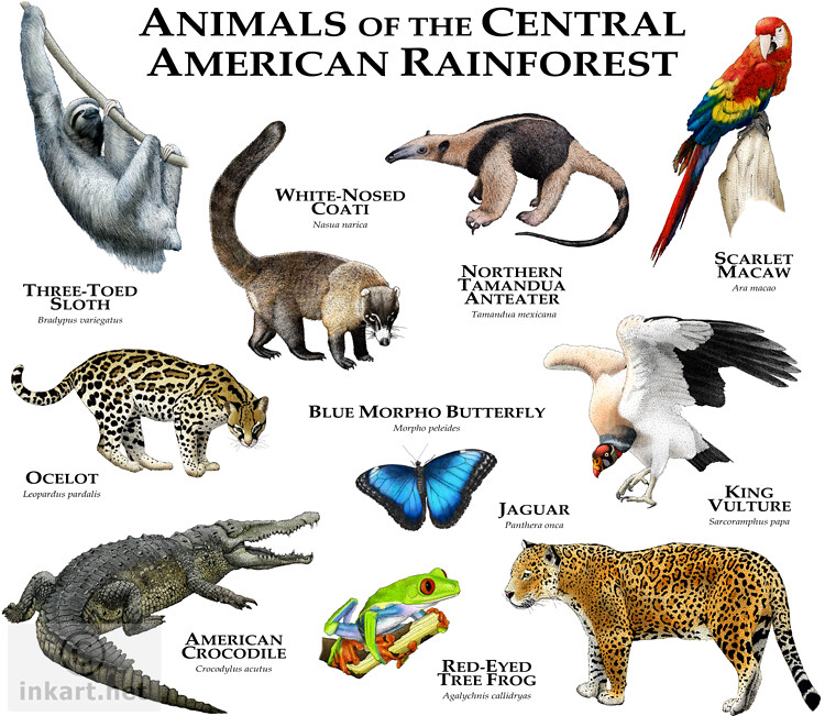 Animals of the Central American