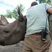 Black rhino 09