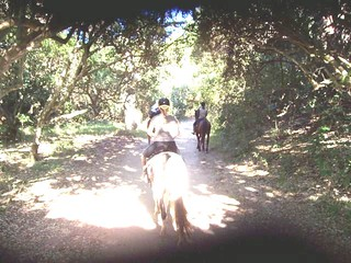 Poudre Wilderness Volunteers - Would you mix your Love of Trail Riding with Volunteer Work?