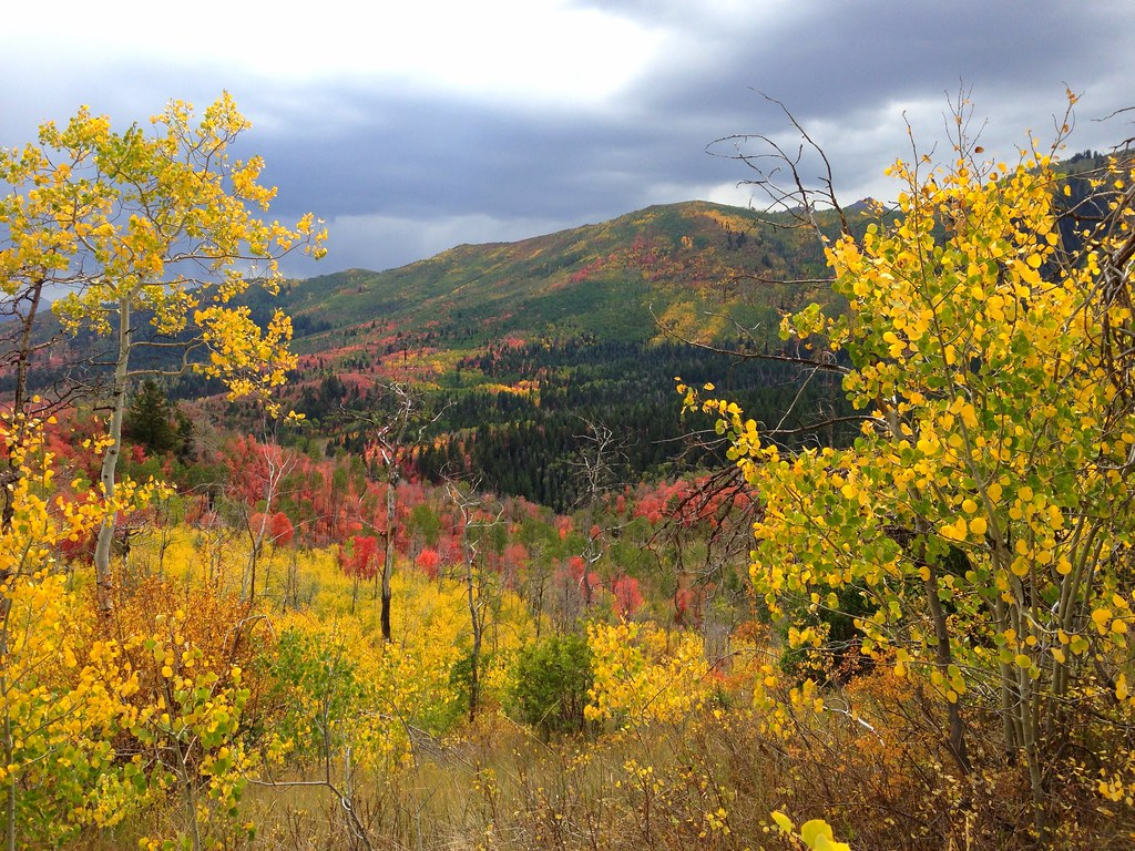 Autumn Landscape American Fork Canyon Utah I Took This