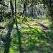 Il mio bosco verde...