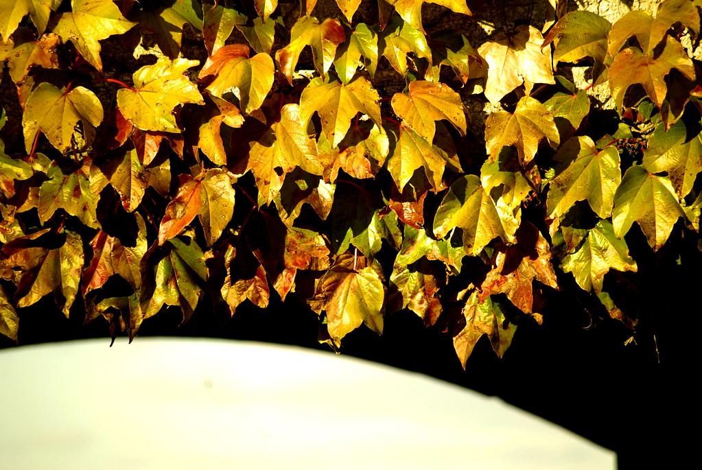 dd3642165dd13 Legends of the Fall | Taken in Chicago, IL Love it? Buy it h… | Flickr