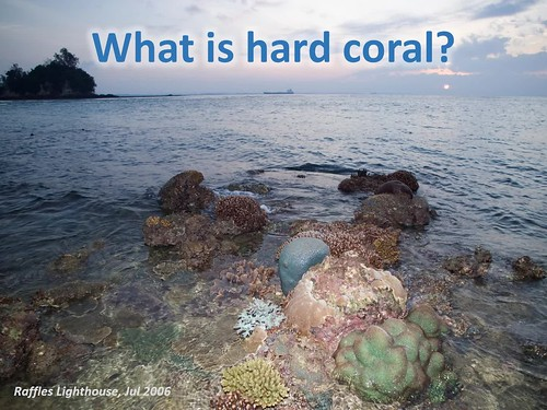 What is a coral? And what is coral bleaching?