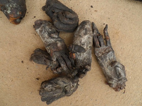 Heavily dried_the remaining bonobo hands and feet