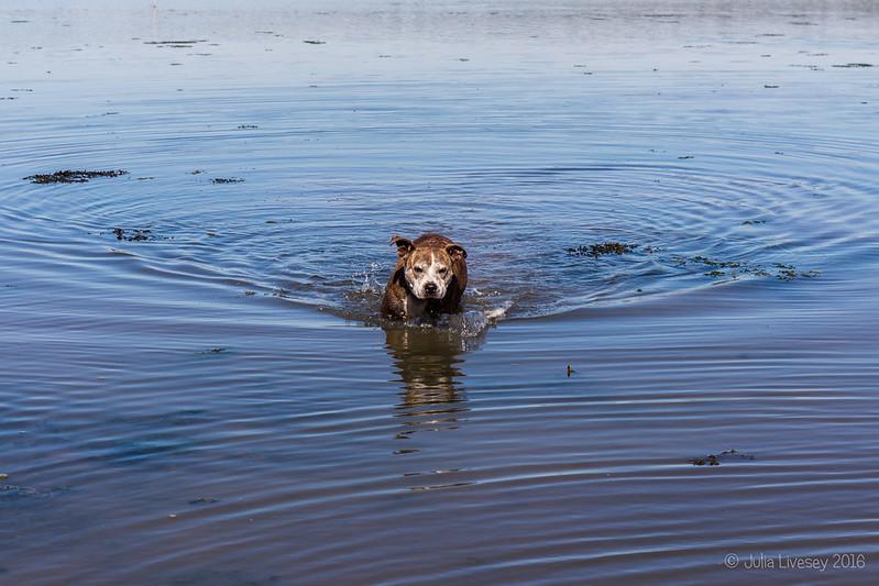 Jez heads to shore