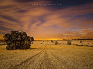 Golden Morning | by byrne_photography