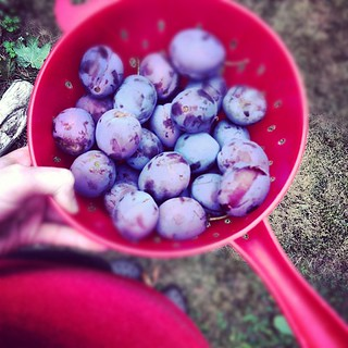 More plum pickin' | by fog and swell