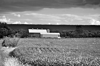 Soy beans and barn | by Targuman