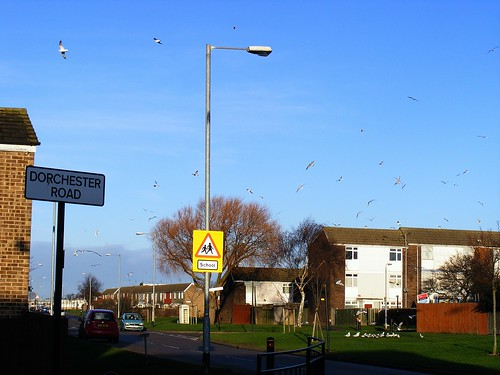 SIGNS AND SEAGULLS ON THE GULAG BRANSHOLME IN HULL | by zxbill55